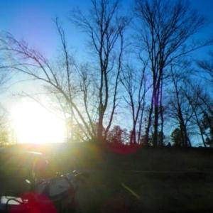 裸木と太陽と青空と春2番