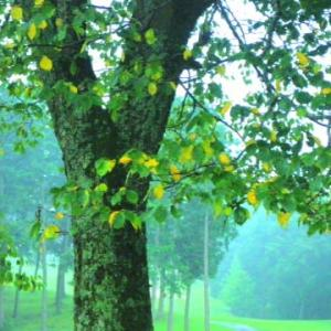 平安と2020年と黄色い葉っぱ