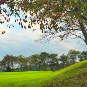 山桜と奇妙な陽気について