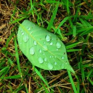 大雨と自画自賛のナイスショット