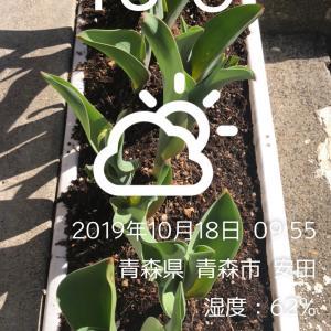 京王閣競輪 G3    12R特選