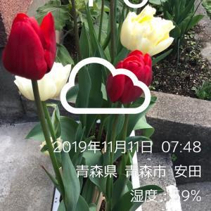 京王閣競輪 F1    11R特選