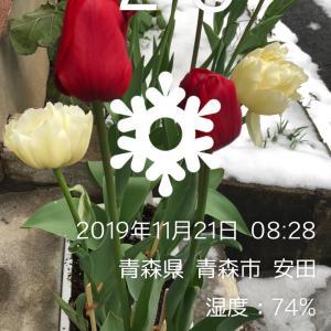 小倉競輪 G1    11Rダイヤモンドレース