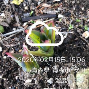 小倉競輪 G3    12R決勝