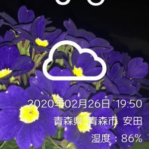 奈良競輪  G3    12R特選