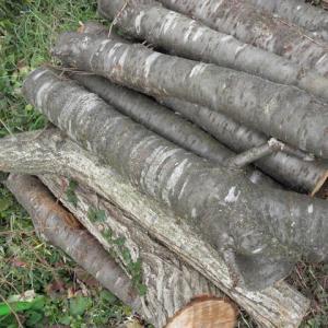 榾木を切ってきました