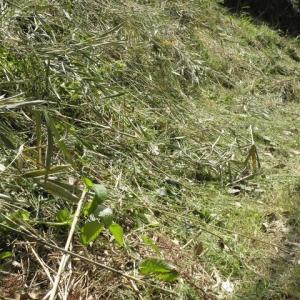 村の道草刈り、道掃除