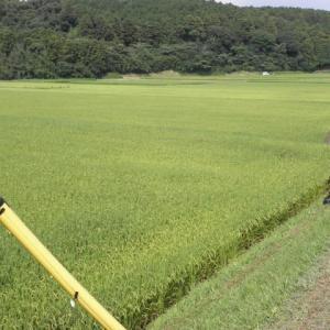 米は半月は遅れている