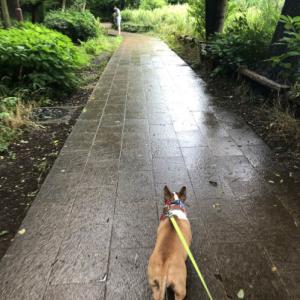 石神井公園いってみた