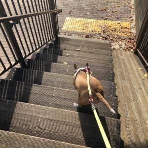 へっぴり階段下り