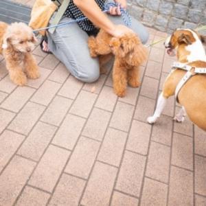 集合! Morning dogs meeting