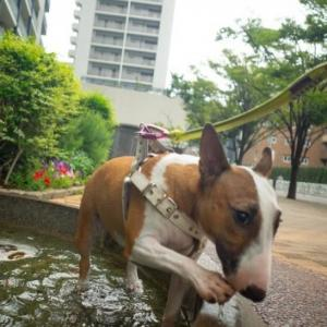3回もお水に入る!Heidi goes into the fountain three times