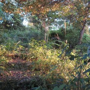 高知市筆山公園の雑草は、いかんぜよ!