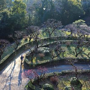 高知城の梅が咲いた