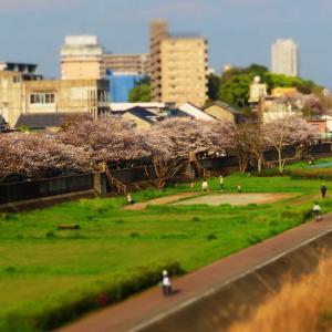ジオラマ風画像と桜