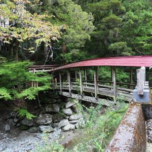 珍しい屋根付き橋と 無うなった日本第二の大杉