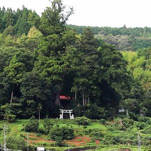 大豊町日浦六社聖神社の杉