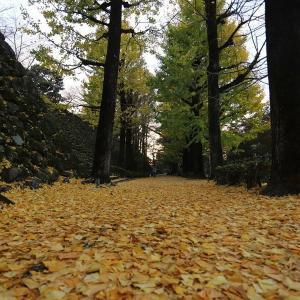 高知城の銀杏