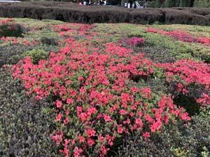 サークル活動 ウオーキング部 徳島中央公園