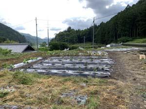 神山町の畑で すいか作り