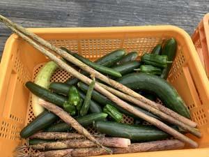 ウッチー理論 野菜は勝手に育つ