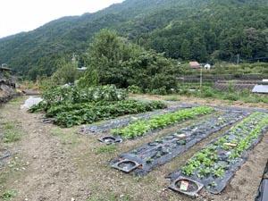 無農薬栽培の難しさ