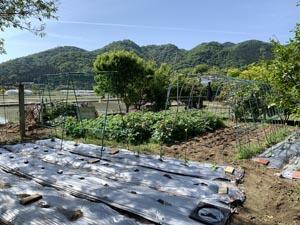 上八万町の畑で 夏野菜の準備