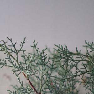 【東京】11/29.30.12/1 クリスマススペシャルレッスンのご案内。