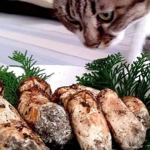 コテジの記念日に松茸収穫