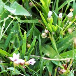 雨上がりの草花