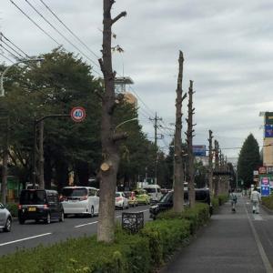 東京オリンピックマラソン会場変更 コミュニケーションの不足??