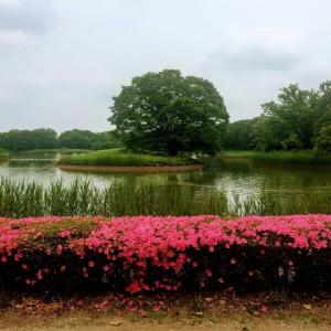昭和記念公園リオープン、野性味あふれる西お花畑