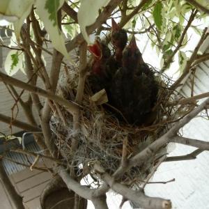 可愛い野鳥の食事風景