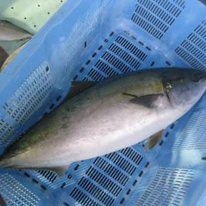 「大寒」です~~寒の魚が美味い!!