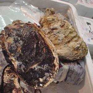 岩牡蠣(イワガキ)