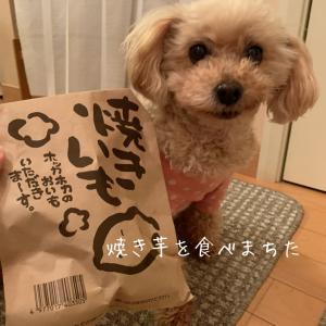 焼き芋食べる?