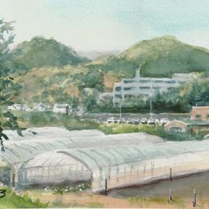 農場のビニールハウス