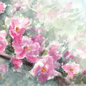 花海棠を描く