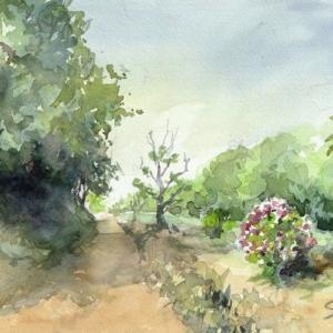 野に咲くアジサイ