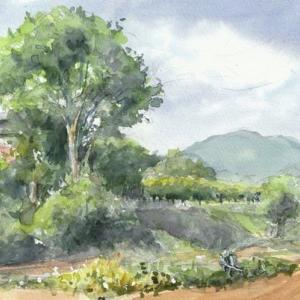 谷戸の菜園