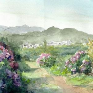 アジサイの咲く丘