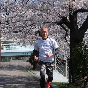 ジャッキーのお花見ジョギング 2020 jogging in cherry blossoms in full bloom