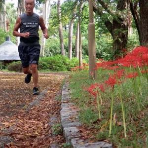 今年は少し遅れた彼岸花の見ごろ red spider lilies made me so good in this season