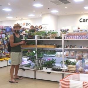100円ショップの植物を侮るなかれ plants I bought at one dollar shop make me happy