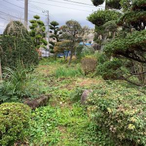 町田市 庭木の管理