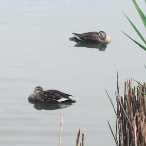 佐鳴湖公園と浜名湖ガーデンパーク