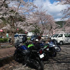 大井川から天竜川 桜ツーリング