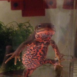 西武線の車内で蛙を拾った!