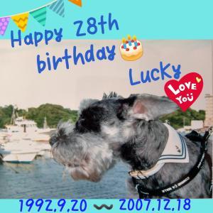 Luckyの28回目のお誕生日。