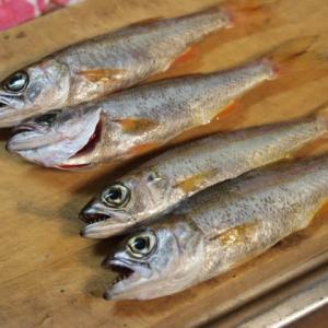 脂のある魚の塩焼きに岩塩を使うと旨い